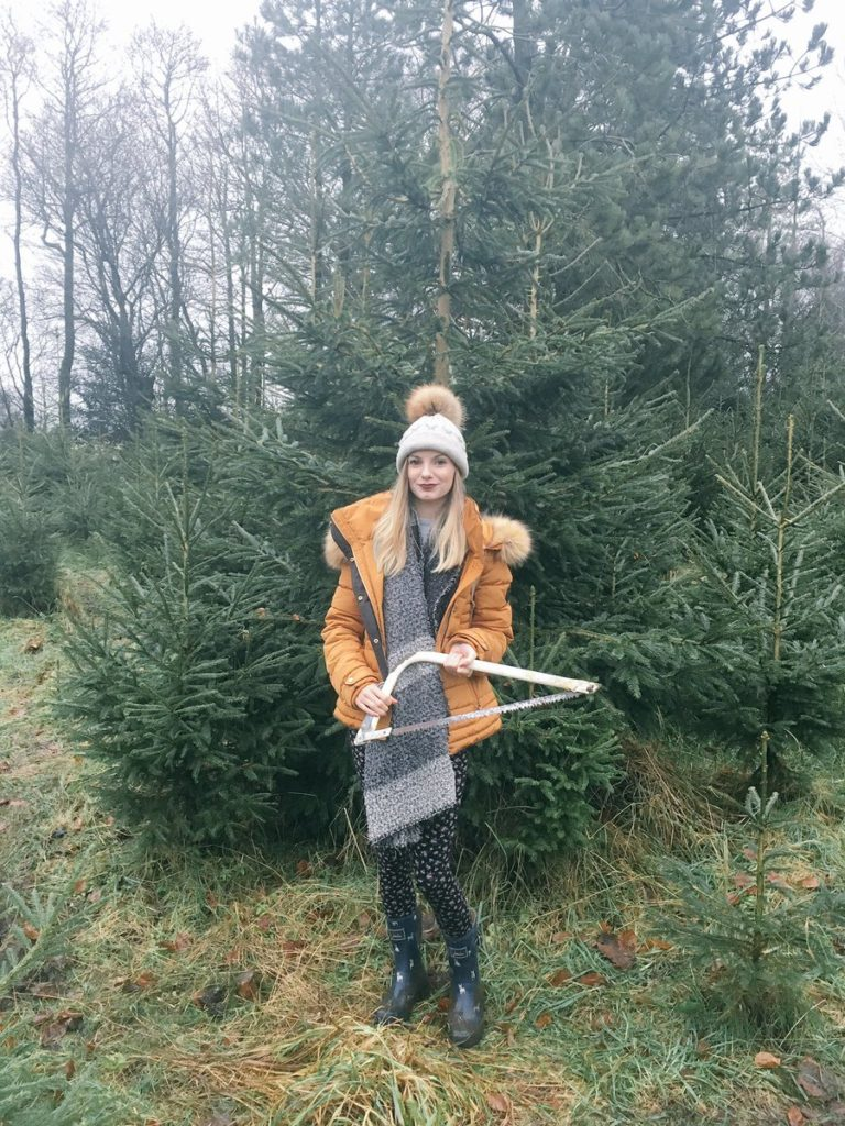 Christmas Tree Forest Cutting