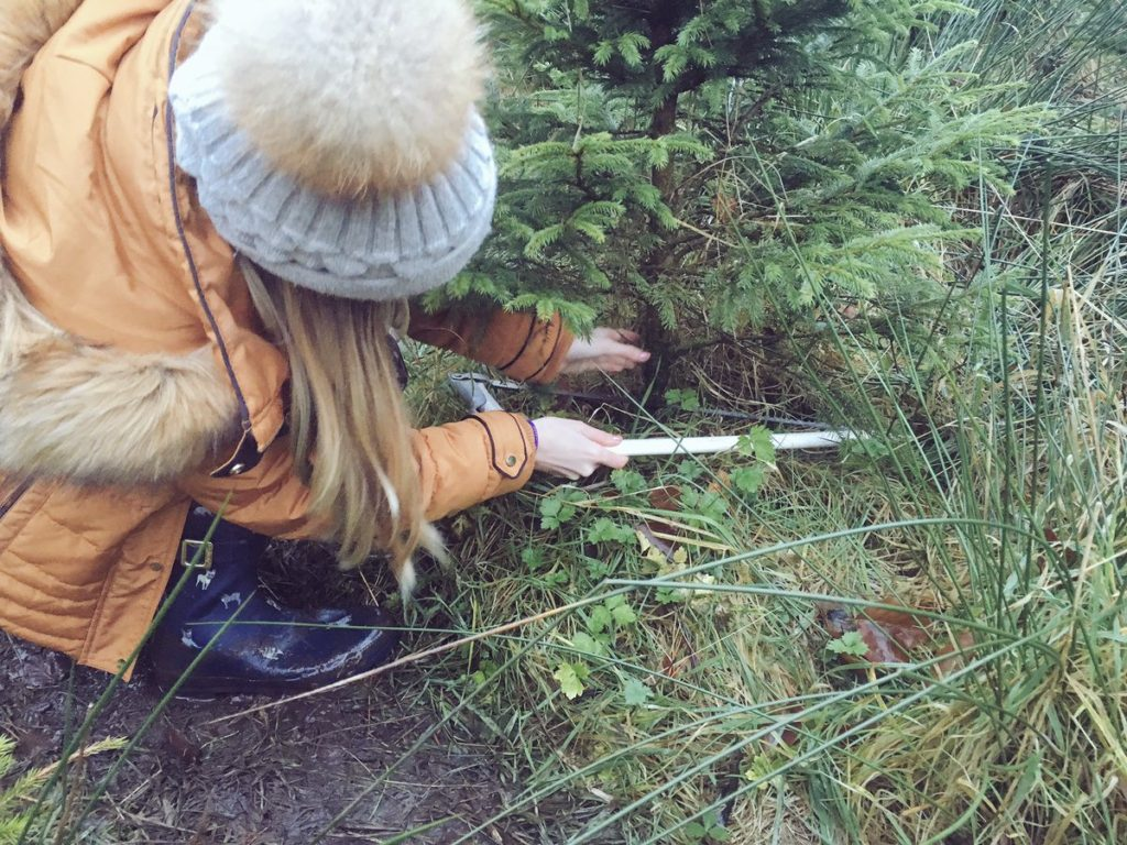 Christmas tree saw action shot