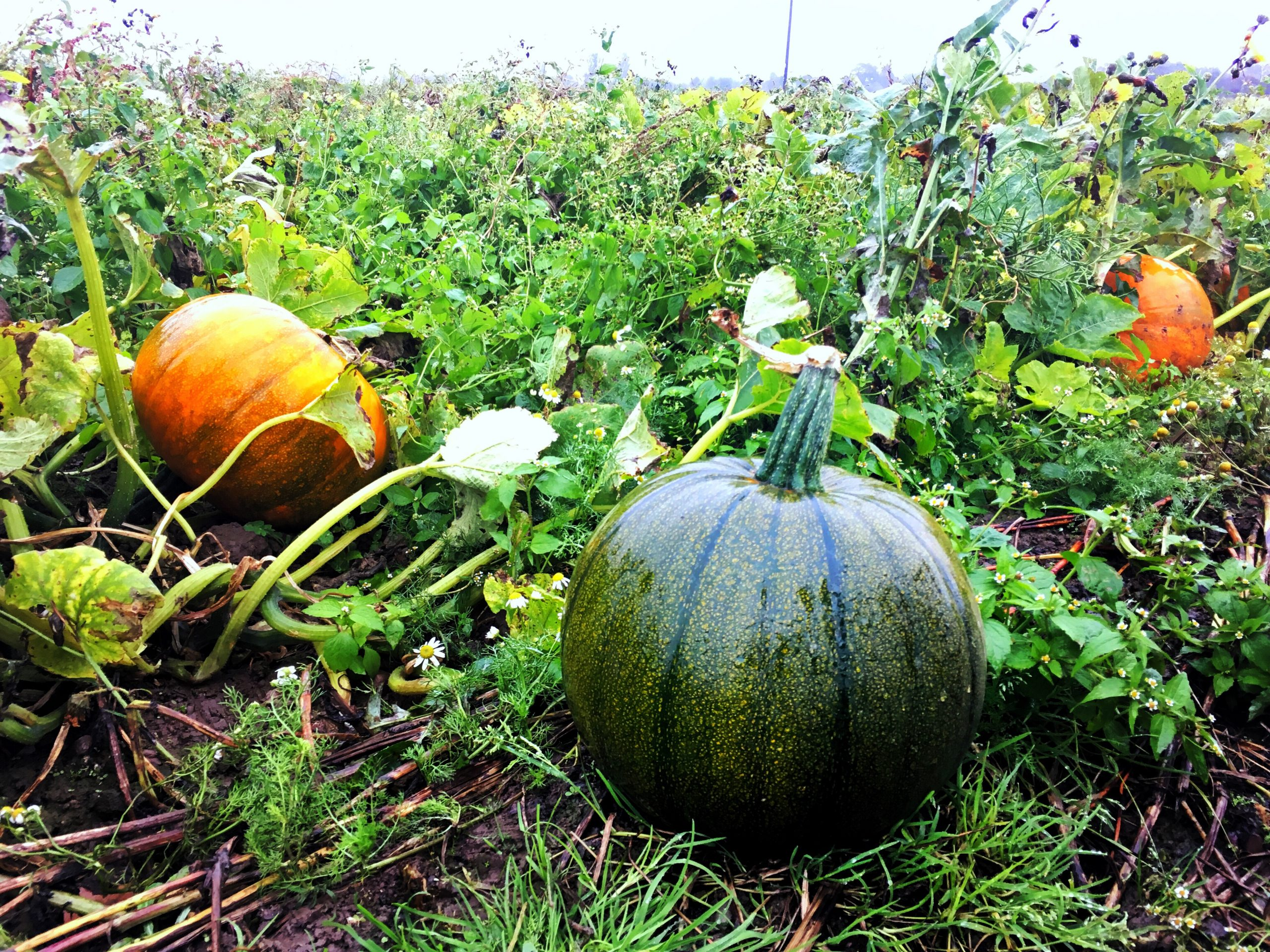 Grandiose Days pumpkin patch food without waste