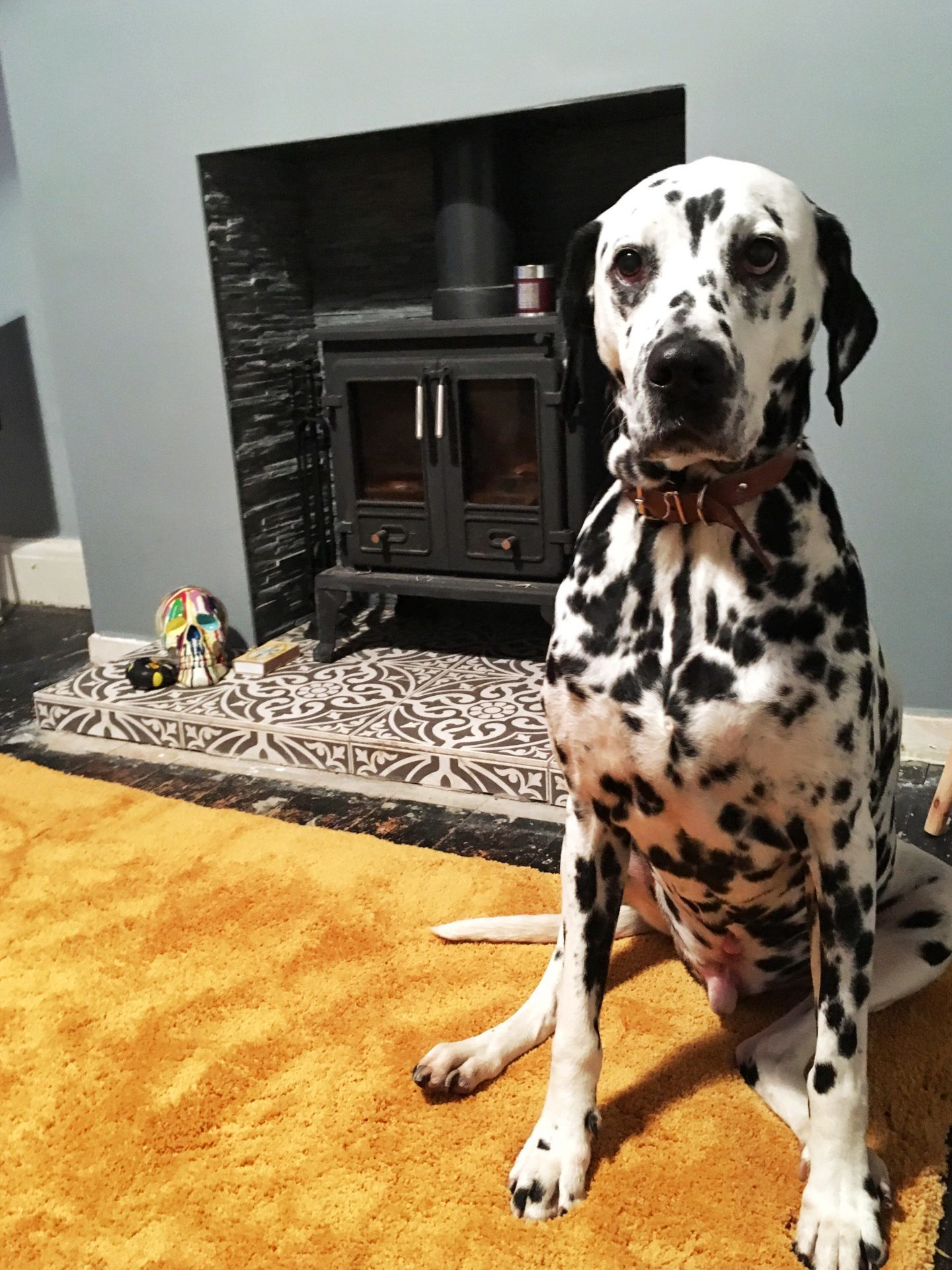 Retro Home Mustard Yellow Rug Log Burner Dalmatian