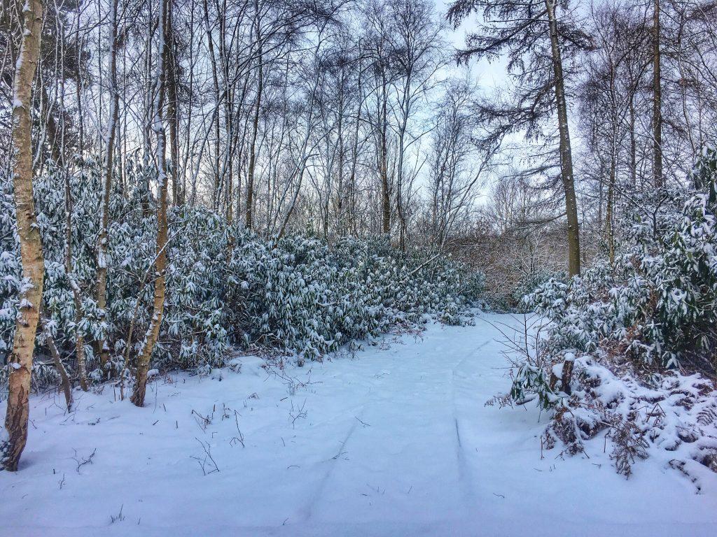 North Star Club Sancton Winter Snow Path