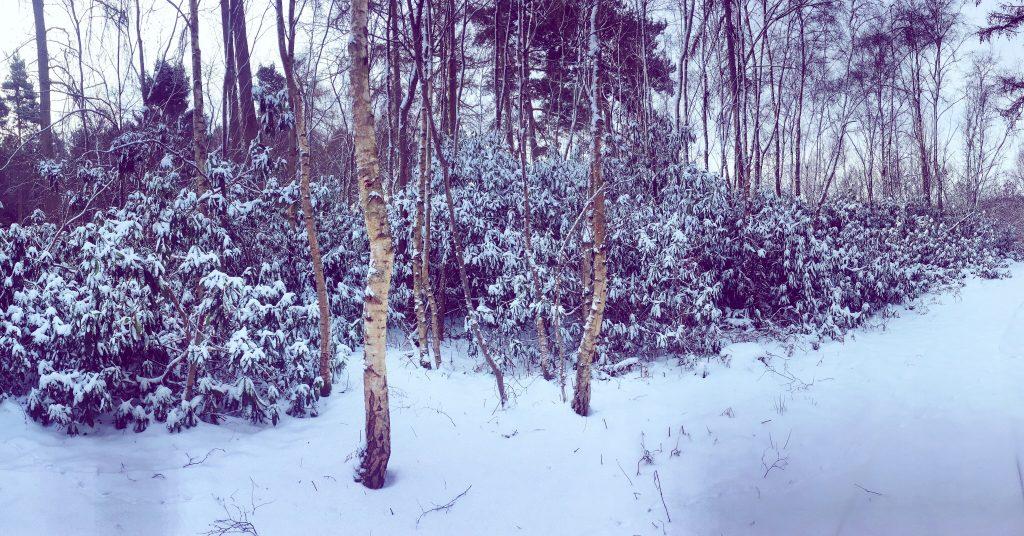 North Star Club winter snow