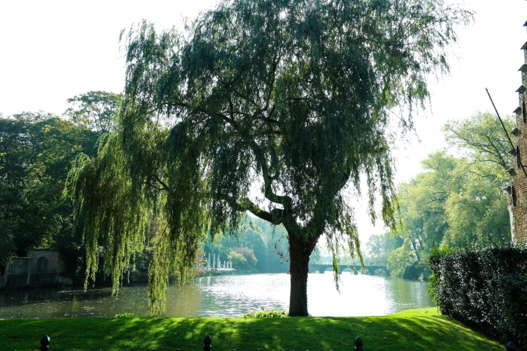 Solo Trip Brussels Minnewater Lake Bruges