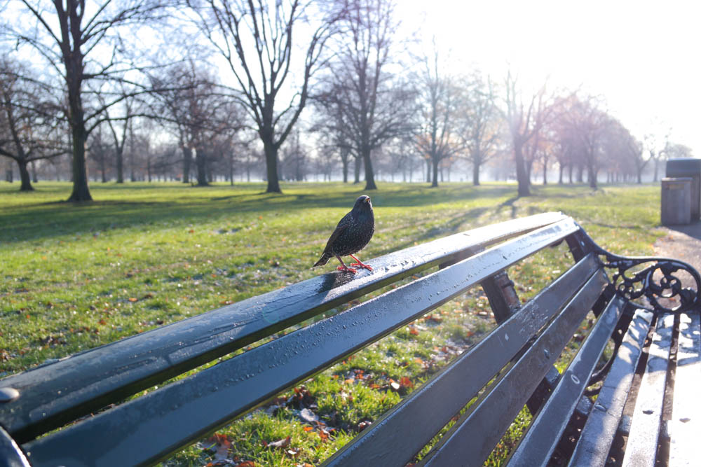 Hyde Park London Bird Bench