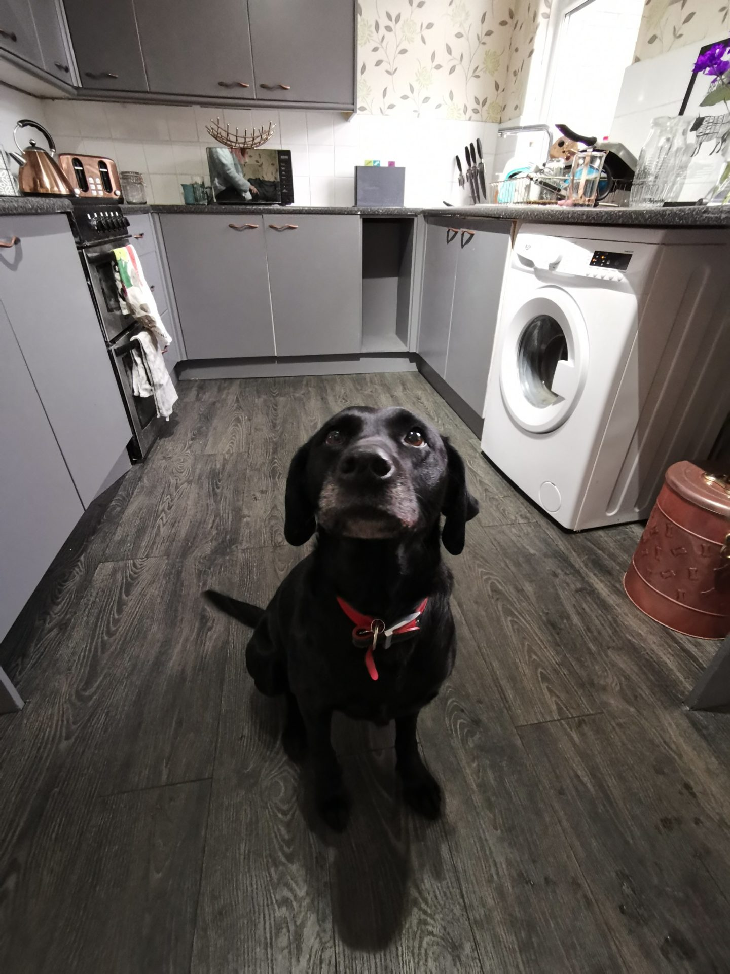Kitchen Renovation under £250 - Labrador Dog - Grey and Rose Gold Accents