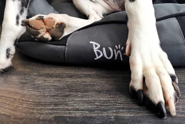 Caring-Dalmatian-ALC-Injury-Bunty-Dog-Bed